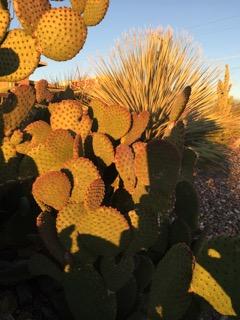 Cactus:Southwest